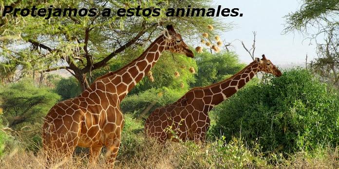 Animales Salvajes Atacando