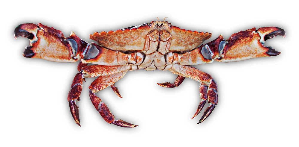 red rock crab, Wild West Commercial Fishing, local seafood, San Diego, Tuna Harbor Dockside Market