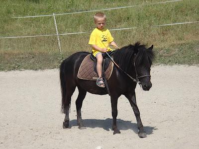 Konie, kucyk, jazda konna, pensjonat dla koni, Kraków