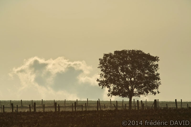 arbre silhouette nuage campagne Seine-et-Marne