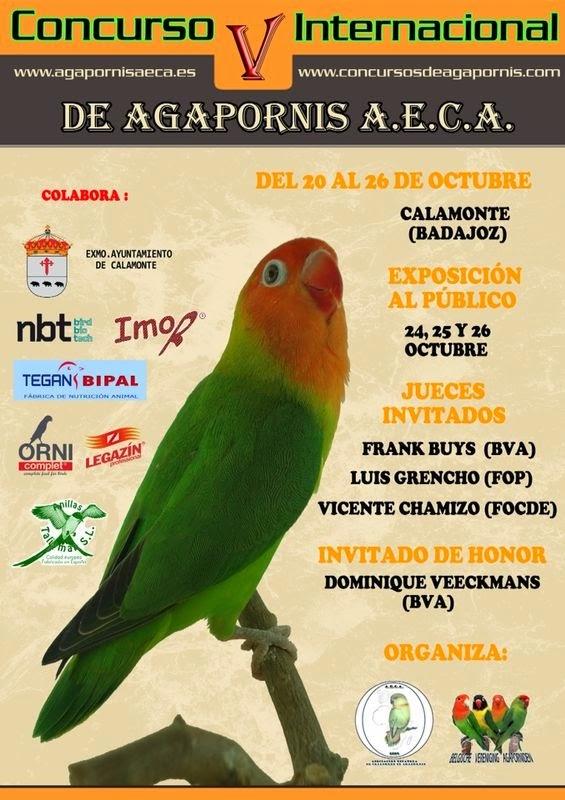 Concurso Internacional de Agapornis, Calamonte (BADAJOZ) España - Spain