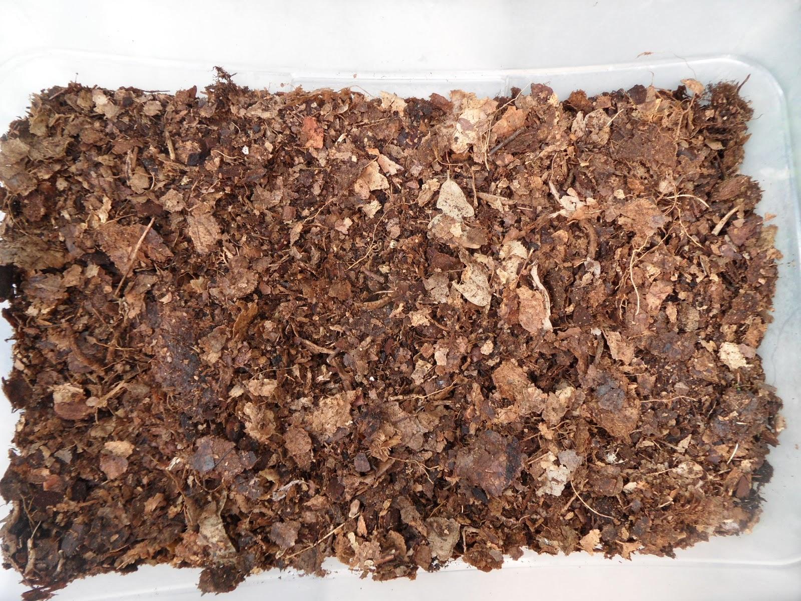 Orqu deas blog de angel mar mantillo de hojas de roble for Mantillo o sustrato