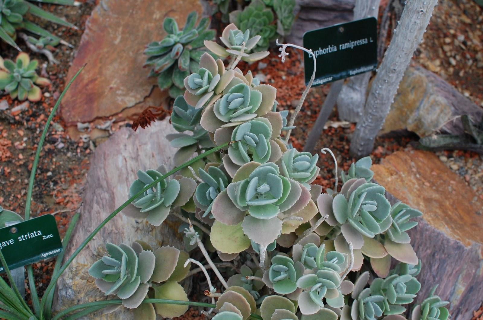Folk and fern paris les grandes serres du jardin des plantes - Serres jardin des plantes ...