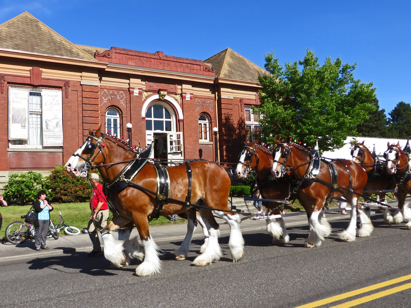 Clydesdale Budweiser Wallpaper The Budweiser Clydesdales Pass