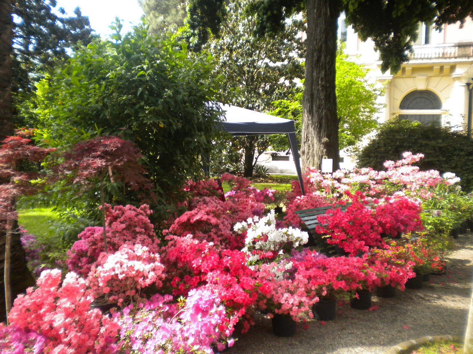 Risultati immagini per planta orto botanico