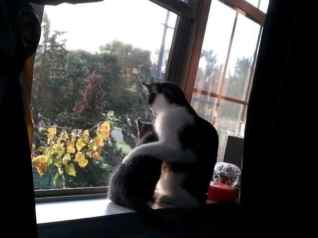 Funny cats - part 82 (40 pics + 10 gifs), cat photo, cat hugs his little kitten