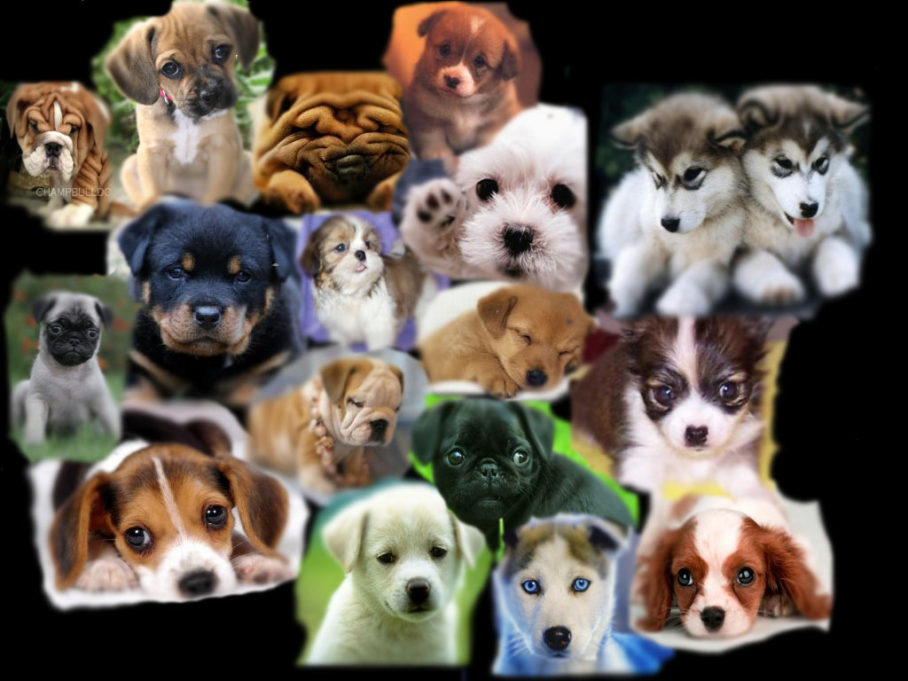Download image cute puppy collage pc android iphone and ipad