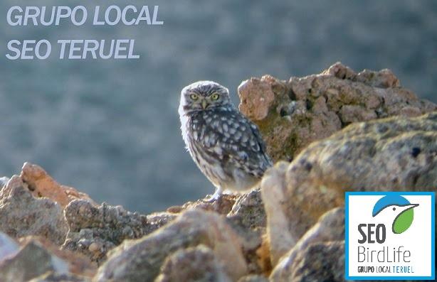 Grupo SEO Teruel