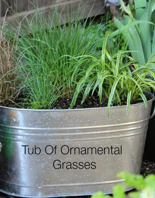 Try a container of ornamental grasses cozy little house for Best ornamental grasses for pots