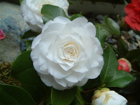 Forever wedding planner il significato dei fiori dalla a for Fiori dalla a alla z