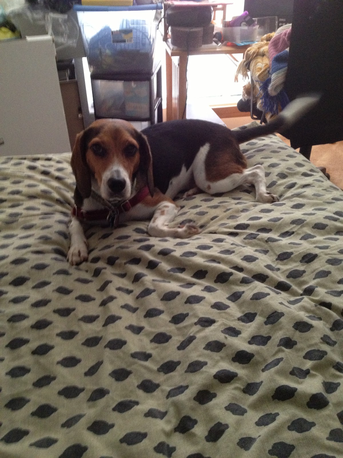 Life With Beagle: Global Pet Expo: Day 3 in Pictures