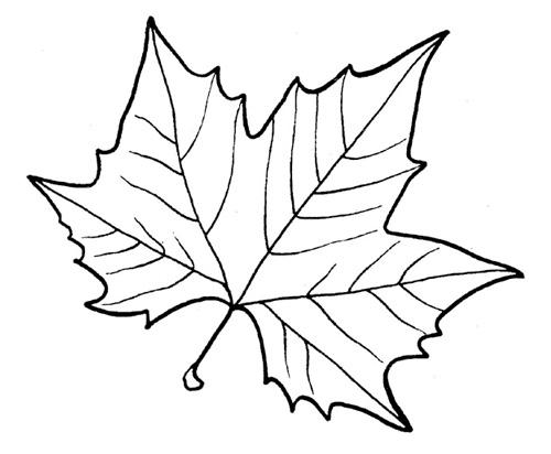 трафарету кленовый лист.