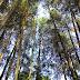 Memanjakan Diri di Taman Hutan Raya Djuanda dan Air Terjun Maribaya