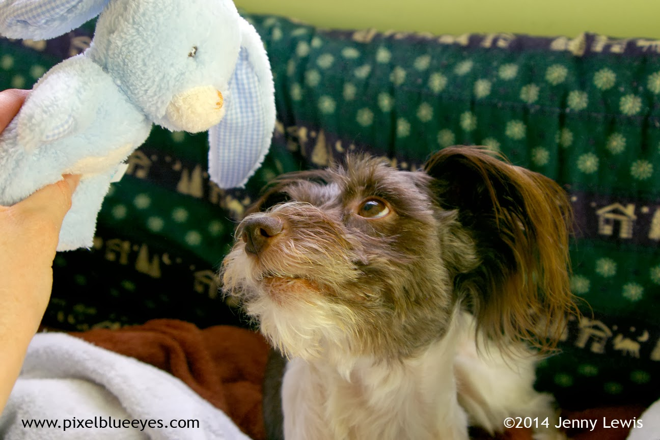 Image of Pixel looking up at Baby Blue Bunny toy