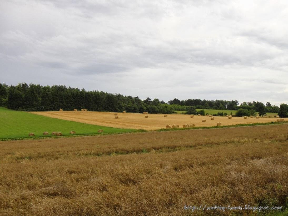 champ de blé bourgogne
