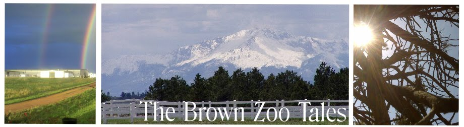 The Brown Zoo Tales