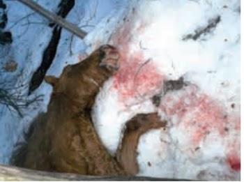 caballos-muertos-parque-nacional-tierra-del-fuego-lapataia