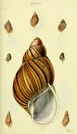 Shell illustration books. Read online or download.