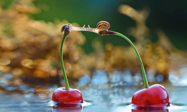 miniature-world-of-snails