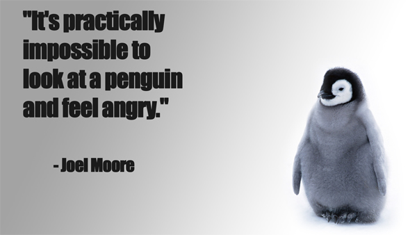 It's Practically Impossible To Look At A Penguin And Feel Angry - Joel Moore
