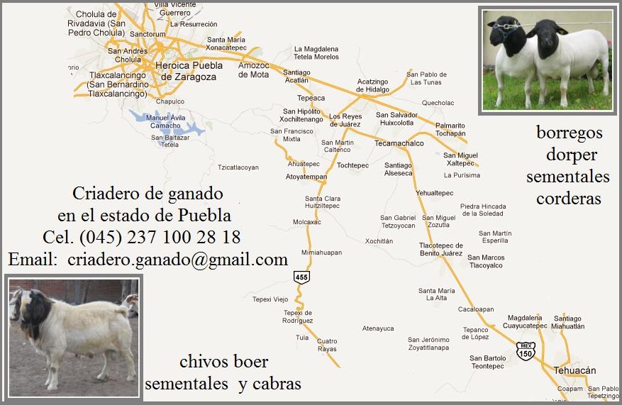 Localización de Criadero Boer