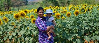 Anisha at the sunflower farm