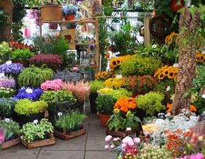 tips membeli bunga sehat