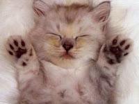 tips-merawat-kucing