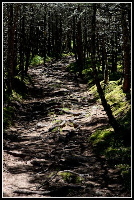 Nova Scotia; Gaff Point; Trail