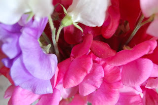What do sweet peas mean to the one you love?
