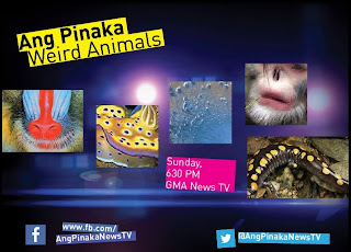 Ang Pinaka | The Most Filipino English News Variety Show