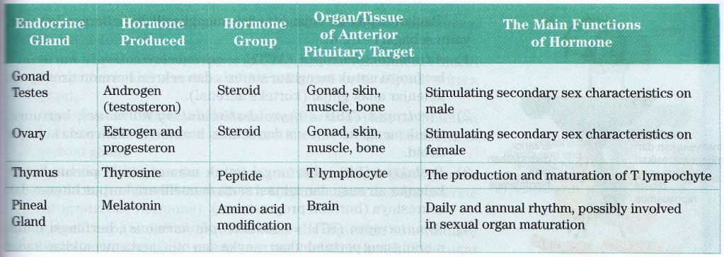 which of the following endocrine glands is directly controlled by the autonomic nervous system