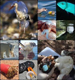 O plástico na natureza é cruel com os animais