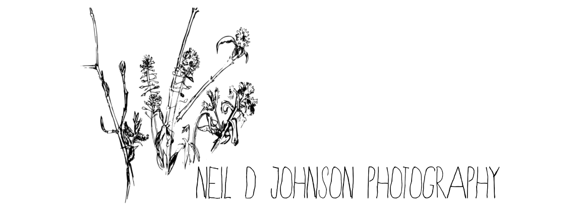 Neil D Johnson