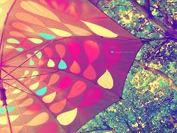 Rain of love!