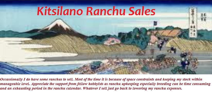 Kitsilano Ranchu Sales....