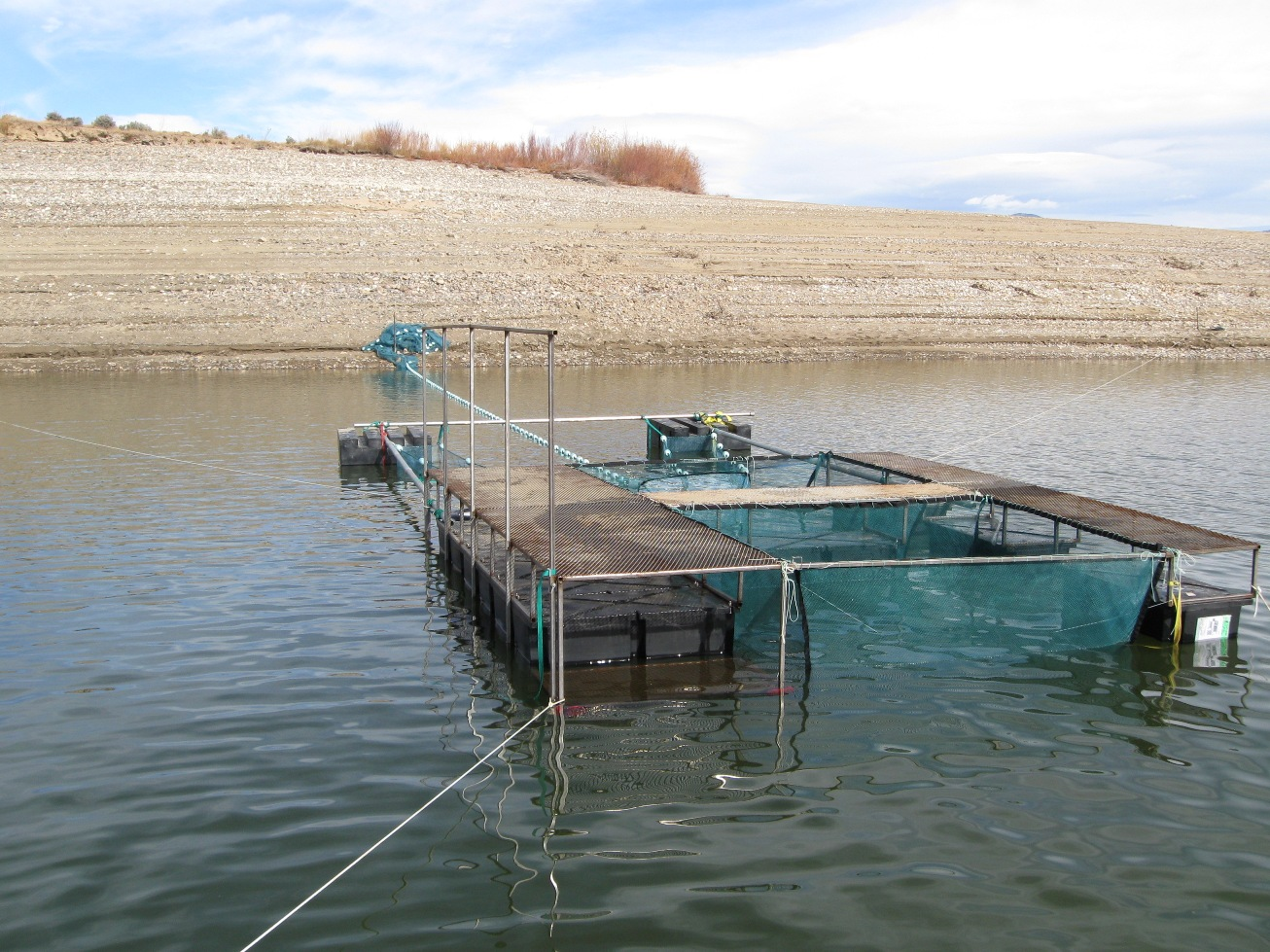 Colorado headwaters fisheries management the merwin trap for Lake merwin fishing