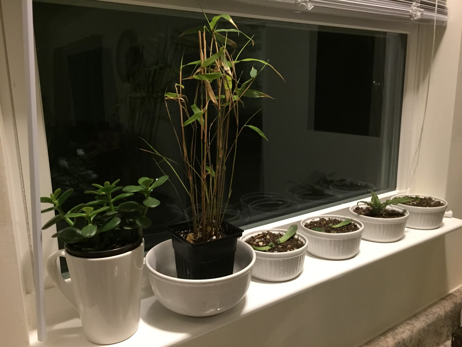 bamboo in windowsill