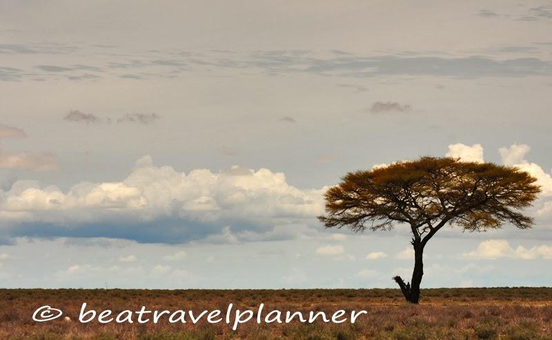 Savana-Veld-Etosha National Park