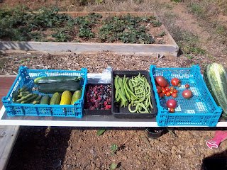 selection of fruit and cegetables harvested