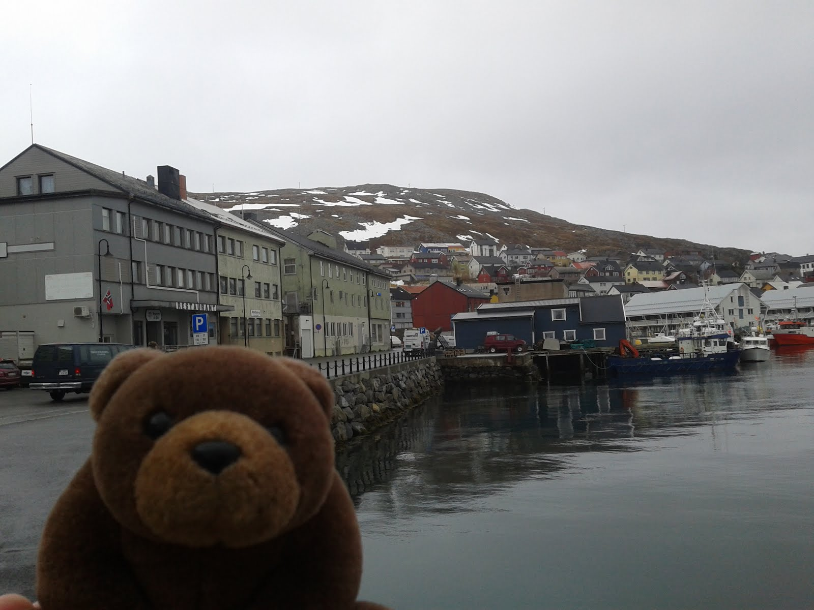 Teddy in Honningsvåg, top of Norway