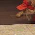 Στην διαφήμιση της ιαπωνικής Pizza Hut πρωταγωνιστούν γάτες...