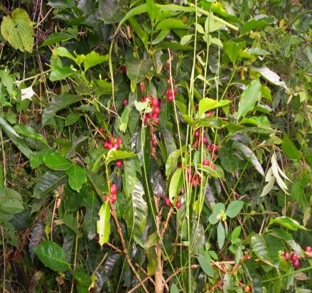 Salida ecologica granja manantial for Concepto de plantas ornamentales