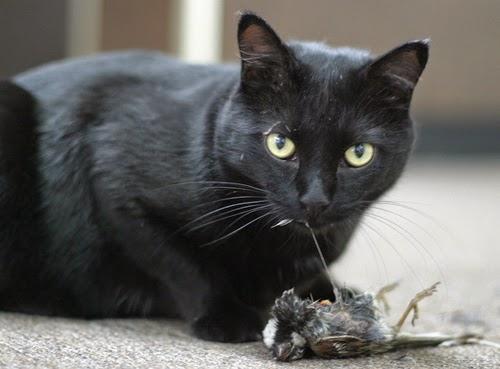 evil_cat.jpg