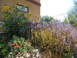 How to Have a Low-Maintenance Yard