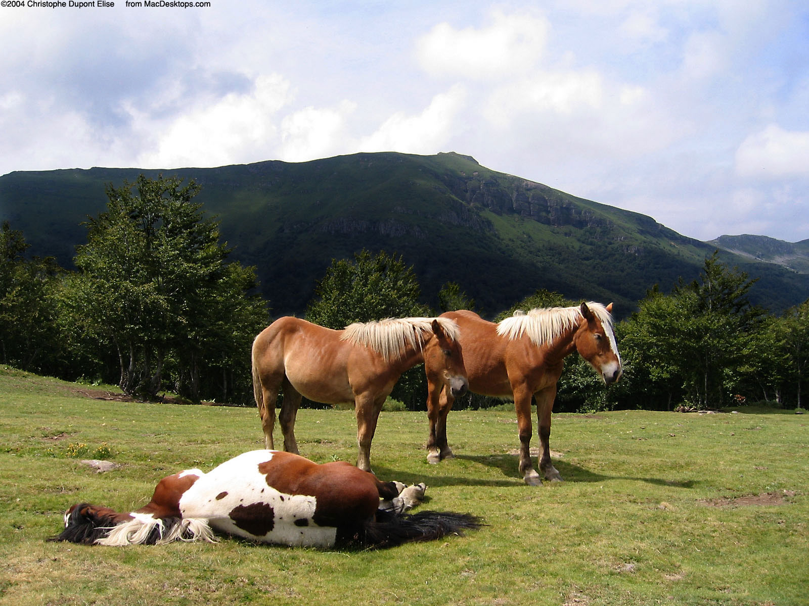 Horse Wallpapers Wild Horses Photos - HD Animal Wallpapers