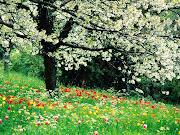 Quando colherei as flores da primavera?