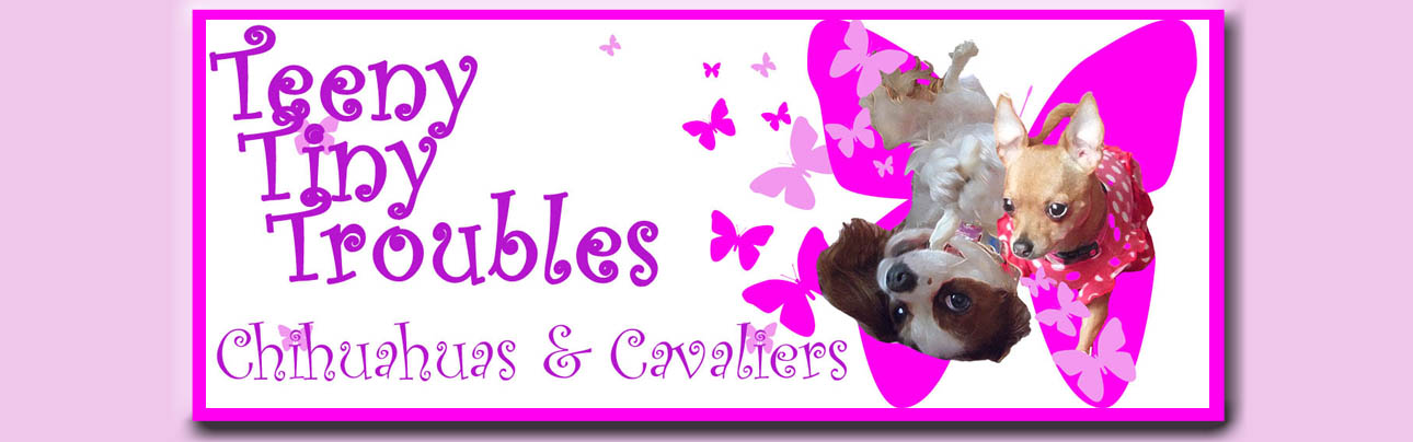 Teeny Tiny Troubles: Chihuahuas & Cavaliers