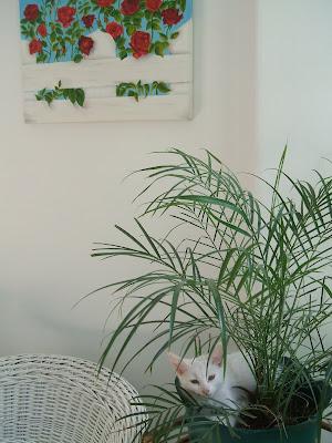 Un viejo gato azul plantas venenosas para el gato - Plantas venenosas de interior ...