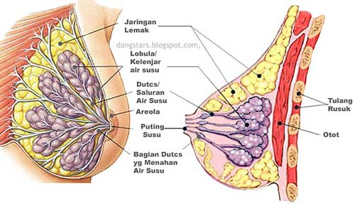 Inspection of breast cancer
